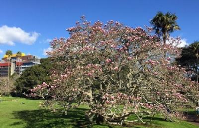新西兰留学――2020年新西兰留学的趋势分析