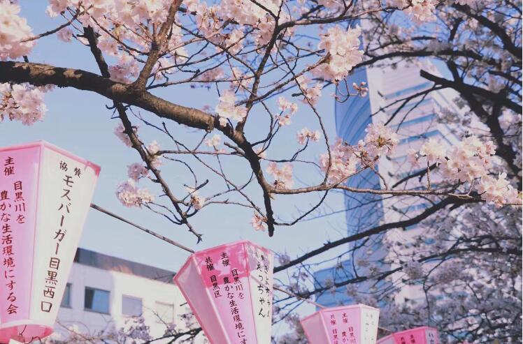 在日本读前沿学科:日本室内设计专业院校选择!