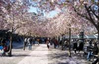 韩国这4所大学,低调奢华有内涵