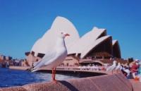 澳洲低龄留学好不好?