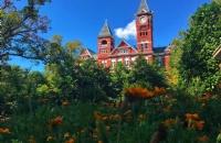 威廉玛丽学院是一所怎样的大学?
