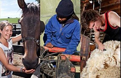 去泰尔福德农业理工学院就读是怎样一种体验?