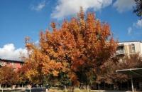 申请德州农工大学需要哪些条件?