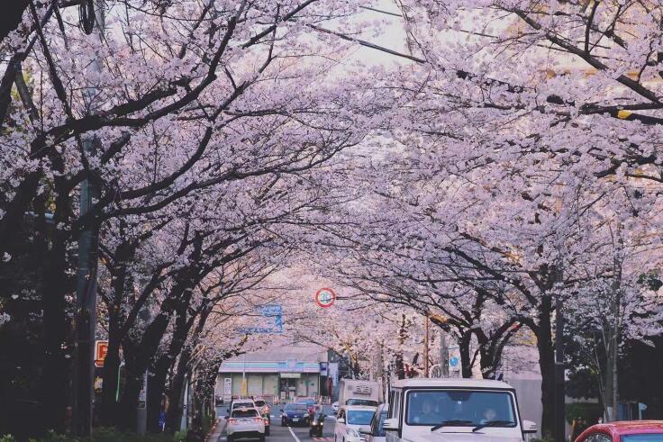 日本不同种类学校的费用,你都了解吗?