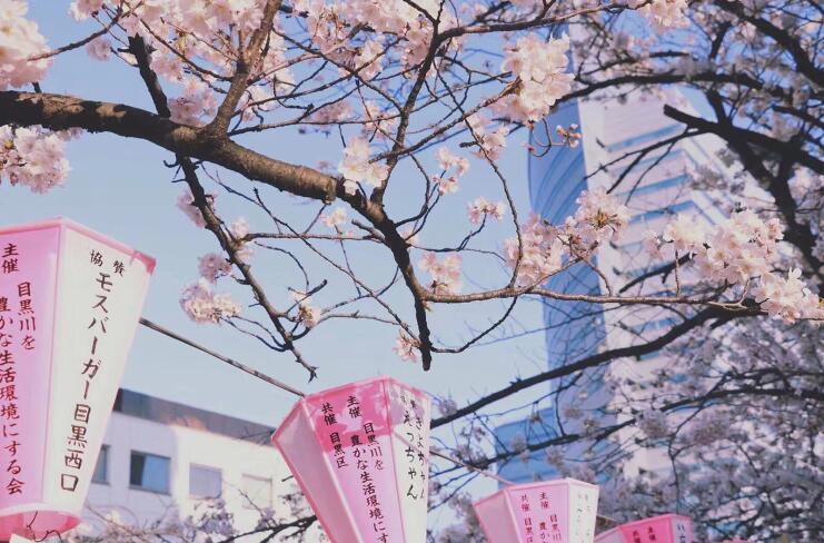 想去日本留学?搞不定研究计划书是不行的!