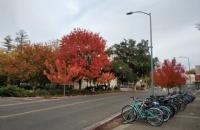 加州大学戴维斯分校哪个专业好?