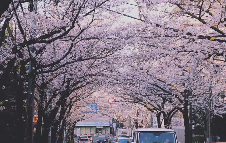 去日本留学,选专业重要还是选学校重要?
