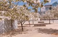 塔斯马尼亚大学商学院优势课程有哪些?