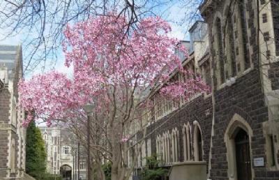 留学新西兰:这样的奥塔哥大学,你动心了吗?