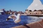 澳洲留学生退税方式