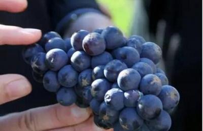 新西兰林肯大学农业, 园艺和葡萄栽培课程介绍
