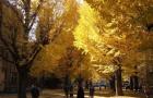 留学知多少:日本五大名校留学费用汇总