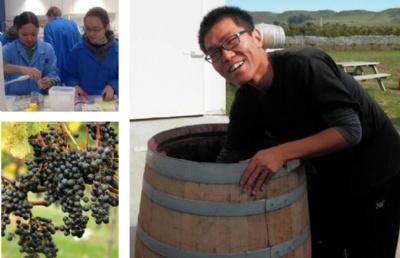 新西兰读葡萄酒专业!东部理工学院葡萄与葡萄酒专业大盘点!