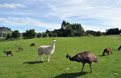 2020年选择新西兰留学的理由是什么呢?