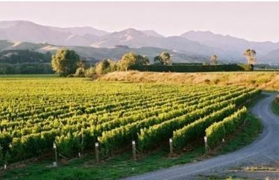 新西兰留学:去新西兰学习葡萄酒相关专业是个明智之选!