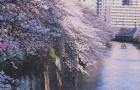 仅历时4个月,Z同学从日本语言学校快速升入日本本科