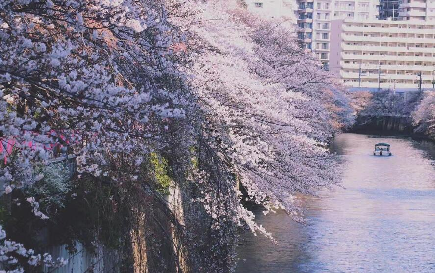 在日本留学,护照、外国人登录证遗失了该怎么办?