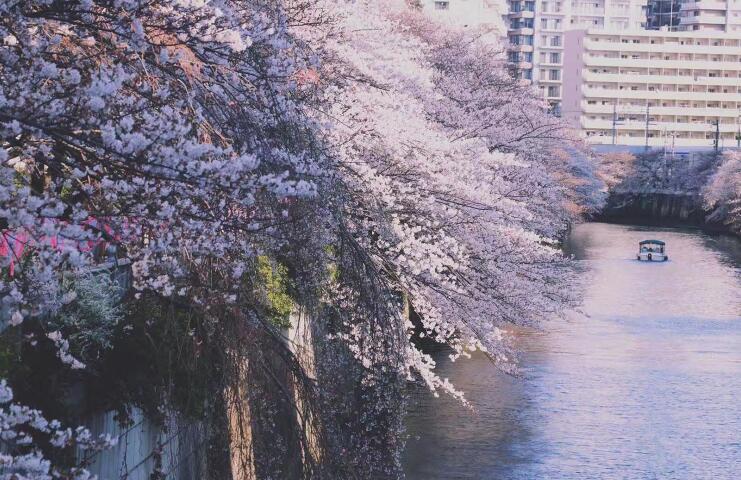 申请日本留学,如何让你的套磁信更专业?