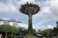 新加坡留学10大优势,你知道几个?