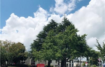 新西兰留学,为什么要选择商科?该选择哪些商科院校?