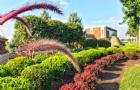 出彩文书弥补硬性条件不足终获加州大学圣塔芭芭拉分校offer!