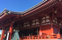 去日本留学,选什么专业对回国就业有利?