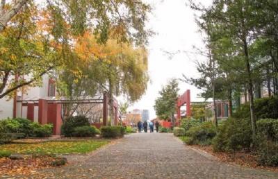新西兰南方理工学院 应用管理8级研究生文凭及9级硕士学位课程