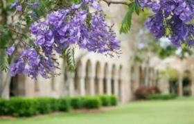 申请时间晚均分无优势,211学子喜获昆士兰大学录取!