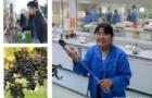 东部理工学院热门课程推荐――葡萄生长与葡萄酒酿造大专介绍