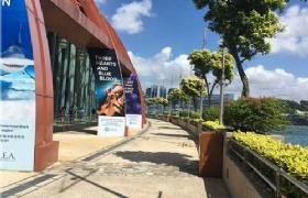 DP? LTVP? 在新加坡工作的家长要如何给孩子办理签证?