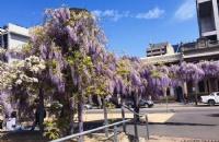 澳洲留学毕业后,该留下还是回国?