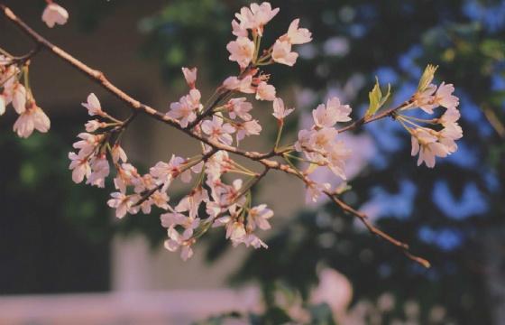 线上活动|日本留学申请条件