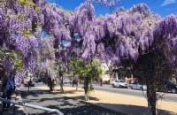 澳大利亚天主教大学会不会不容易毕业?