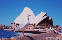 留学:为何选择去澳洲?