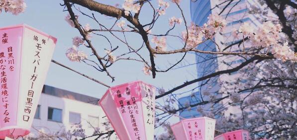 想申请这些日本大学的同学们注意,新政策来了!