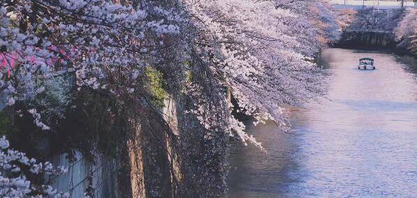 赴日留学新途径:日本本科大学国内直招!