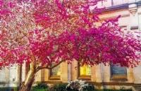 如何进入中央昆士兰大学读硕士?我应该如何努力?