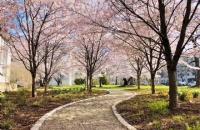吸引了大批留学生的匹兹堡大学,究竟好在哪里?