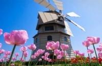 你不知道的留学新宠丨宝藏王国荷兰
