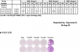 泰国自主研发的新冠肺炎疫苗猴体实验取得成功