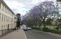 如何进入澳大利亚圣母大学就读?