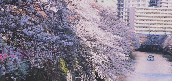 """2020年日本""""最想居住地区""""榜单,第一名果然还是这里!"""