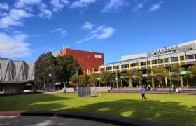 就业碰壁,选择留学,莫纳什大学伸出橄榄枝!