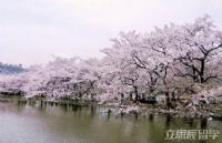 日本搭建智能app的语言学校:东京COSMO学园