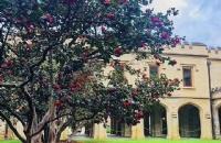 格里菲斯大学申请条件有哪些?