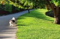 新西兰林肯大学有什么值得称赞的地方?