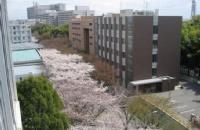 """日本法政大学的""""政""""――政治学研究科"""