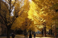 东京大学GSP项目申请解析,2020年录取率不到15%?