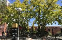 为什么有超多留学生选择去西悉尼大学?
