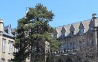 圣力嘉学院入学条件
